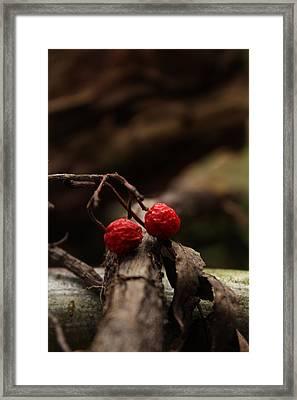 Red Berries Framed Print