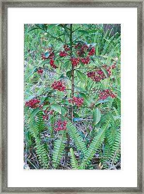 Red Berries Framed Print by Tara Kearce
