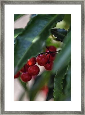 Red Berry Framed Print