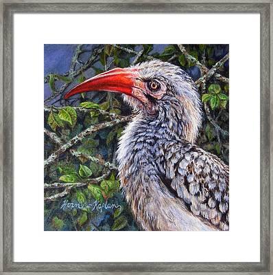Red Billed Hornbill Framed Print by Denise Horne-Kaplan