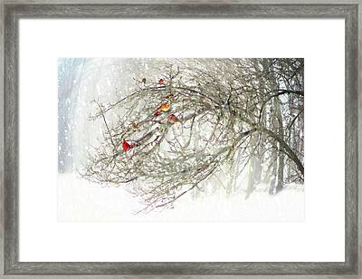 Red Bird Convention Framed Print