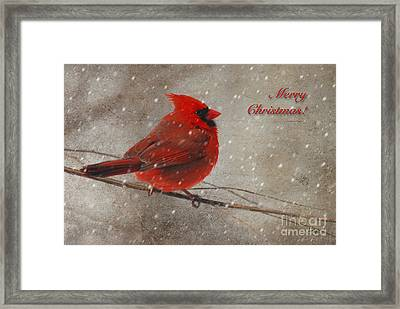 Red Bird In Snow Christmas Card Framed Print by Lois Bryan