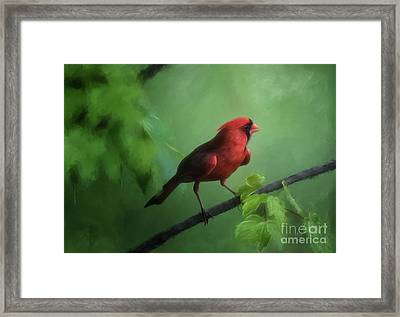 Red Bird On A Hot Day Framed Print by Lois Bryan