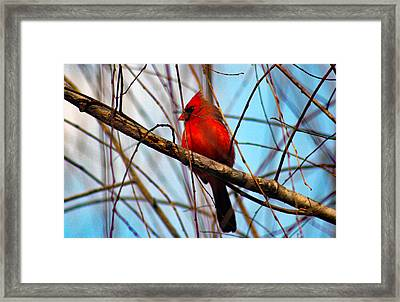 Red Bird Sitting Patiently Framed Print