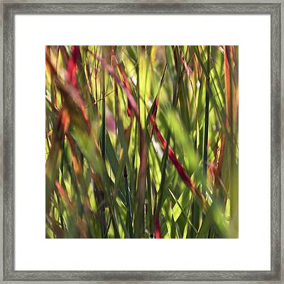 Red Blades Among The Green Framed Print