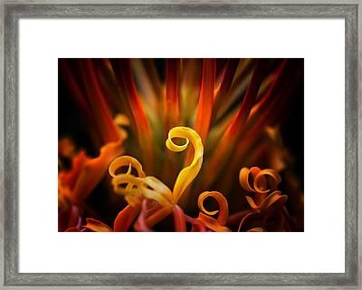 Framed Print featuring the photograph Red Blazing Flower by Ken Barrett