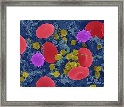 Red Blood Cells, Monocytes, Platelets And Fibrin, Sem Framed Print