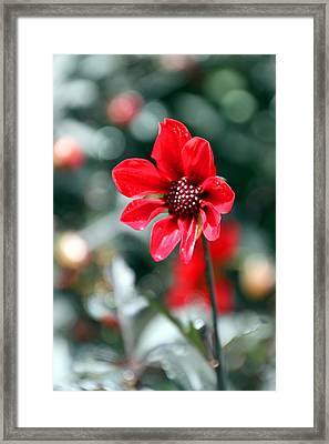 Red Bokeh2 Framed Print by Carolyn Stagger Cokley