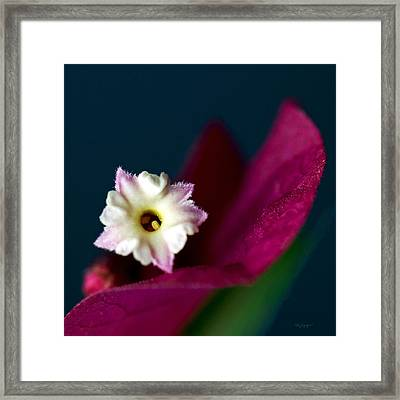Red Bougainvillea  Framed Print by Thanh Thuy Nguyen