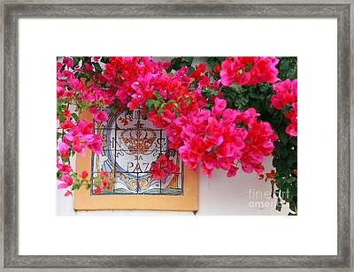 Red Bougainvilleas Framed Print