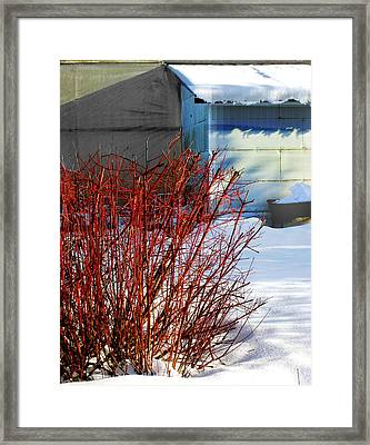 Red Branches And Snow Framed Print by Barbara  White
