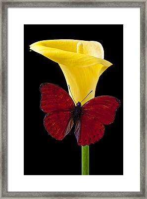 Red Butterfly And Calla Lily Framed Print