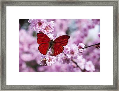 Red Butterfly On Plum  Blossom Branch Framed Print