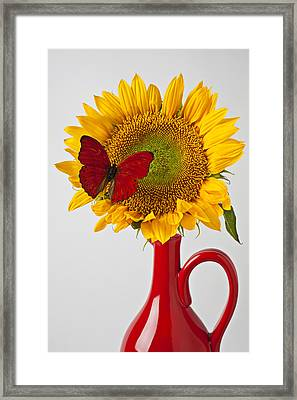 Red Butterfly On Sunflower On Red Pitcher Framed Print by Garry Gay