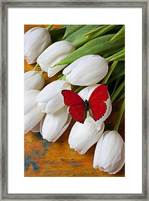Red Butterfly On White Tulips Framed Print