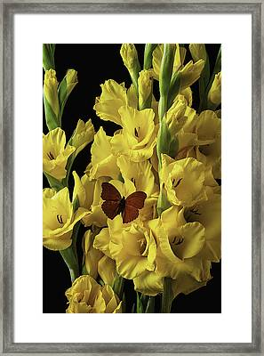 Red Butterfly On Yellow Glads Framed Print by Garry Gay