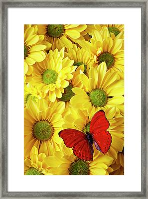 Red Butterfly On Yellow Mums Framed Print