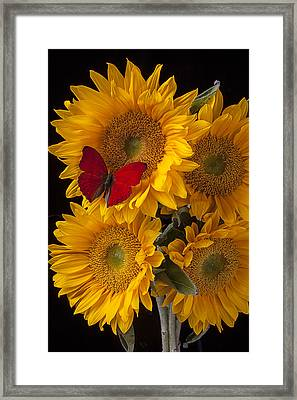 Red Butterfly With Four Sunflowers Framed Print by Garry Gay