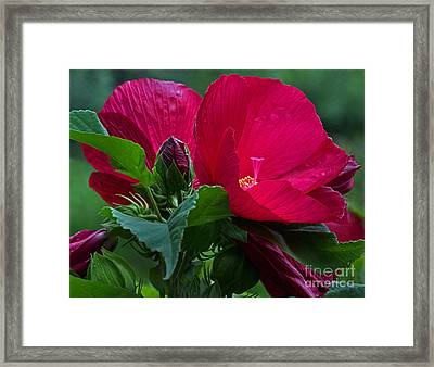 Red By The Pond Framed Print