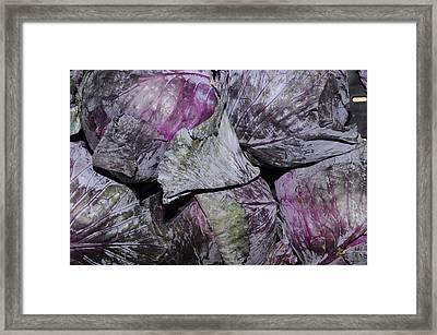 Red Cabbage Framed Print
