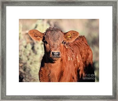 Red Calf Framed Print