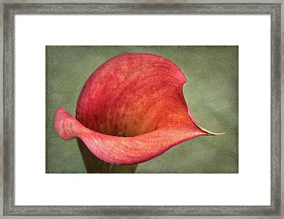 Red Calla Framed Print by Jurgen Lorenzen