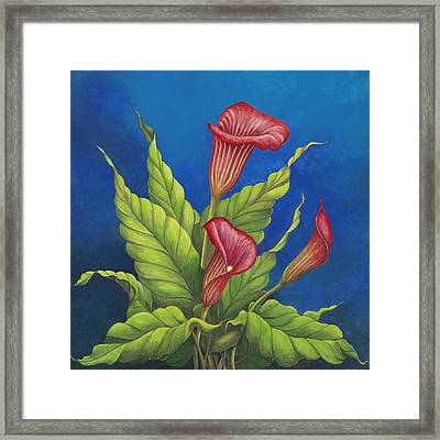 Red Calla Lillies Framed Print by Carol Sabo