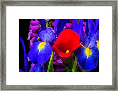 Red Calla Lily With Blue Iris Framed Print by Garry Gay