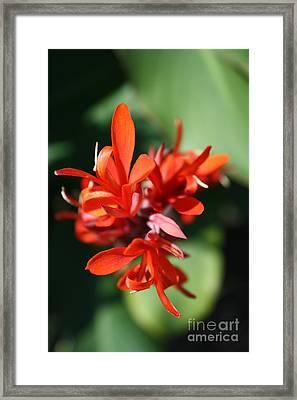Red Canna Flower Framed Print by John W Smith III