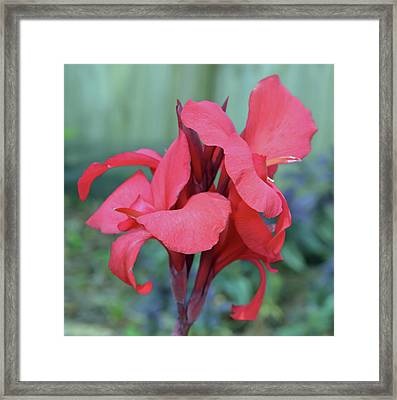 Red Canna Lily Floral Framed Print by Aimee L Maher Photography and Art Visit ALMGallerydotcom