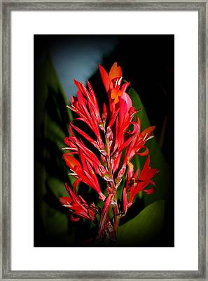 Red Cannas Bloom By Earl's Photography Framed Print by Earl  Eells a