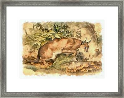 Red Caracal Framed Print by Sergey Lukashin
