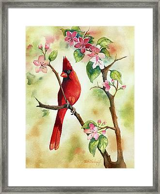 Red Cardinal And Blossoms Framed Print