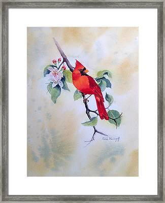 Red Cardinal  Framed Print