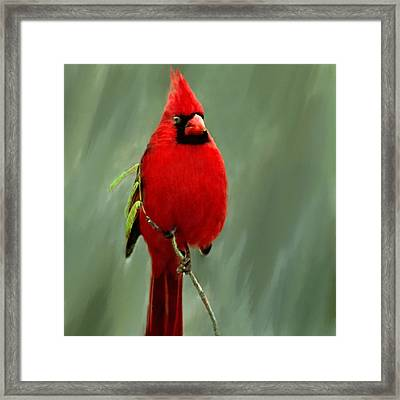 Red Cardinal Painting Framed Print