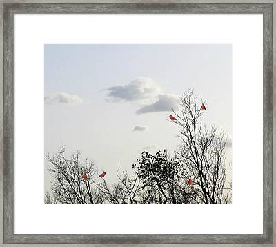 Red Cardinals Framed Print by Marianna Mills