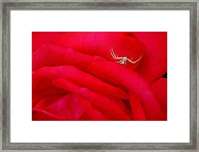 Red Carpet Framed Print by Mark Lemon