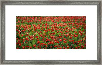 Framed Print featuring the photograph Red Carpet by Tom Vaughan