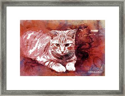 Red Cat Framed Print by Jutta Maria Pusl