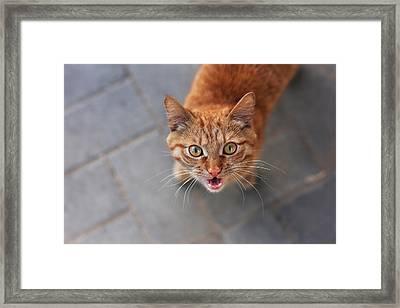 Red Cat Bob Framed Print