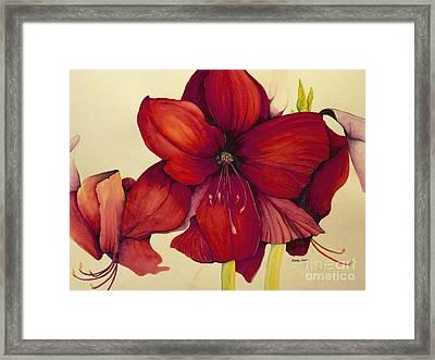 Red Christmas Amaryllis Framed Print