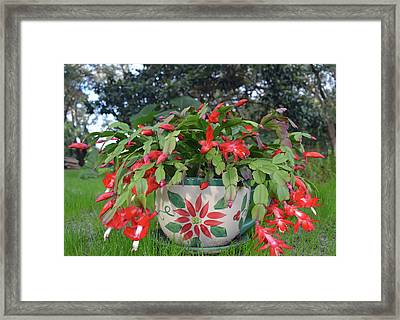 Red Christmas Cactus Framed Print by Aimee L Maher Photography and Art Visit ALMGallerydotcom