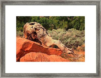 Red Cliffs Wooly Mammoth Framed Print