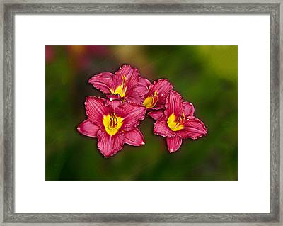Framed Print featuring the photograph Red Columbine Hybrid by John Haldane