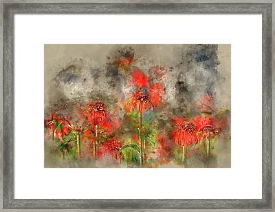 Red Cone Flowers Framed Print