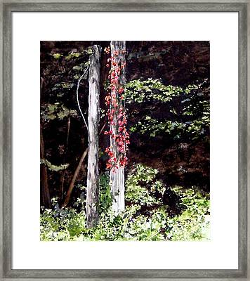 Red Creeper Framed Print by Carla Dabney