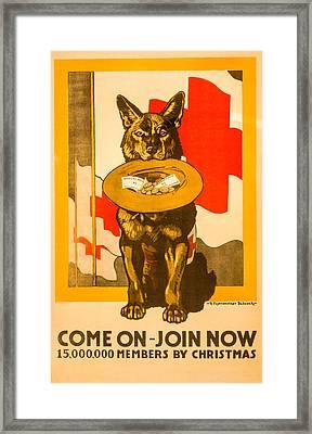 Red Cross Dog Framed Print