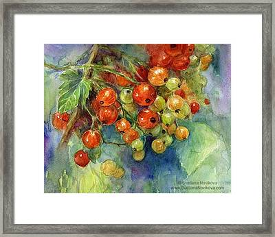 Red Currants Berries Watercolor Framed Print