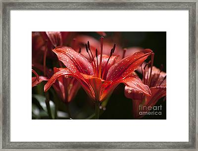 Framed Print featuring the photograph Red Day Lily 20120615_52a by Tina Hopkins