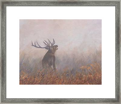 Framed Print featuring the painting Red Deer Stag Early Morning by David Stribbling